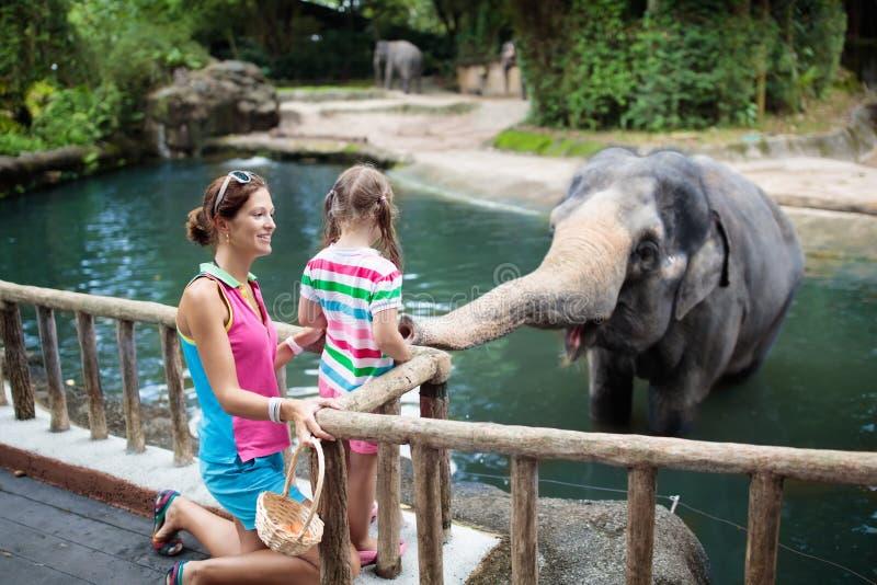 孩子饲料大象在动物园里 在野生动物园的家庭 库存照片