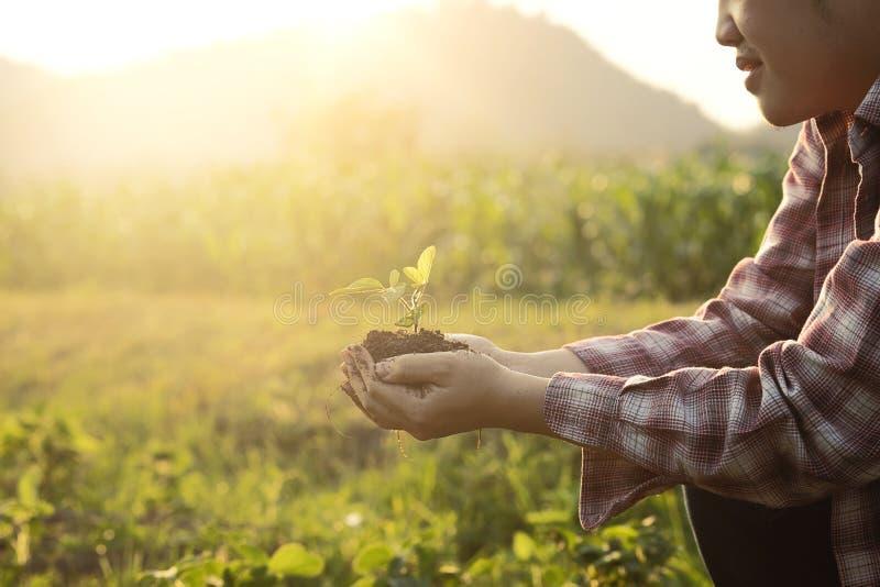 婴孩植物在手边农业 自然特写镜头和选择聚焦和葡萄酒定调子 库存照片