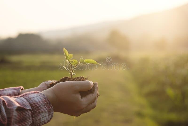 婴孩植物在手边有农业领域背景 免版税库存图片