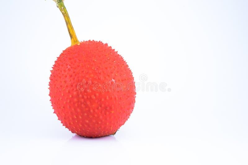 婴孩波罗蜜多刺的苦涩金瓜,甜金瓜, 库存图片