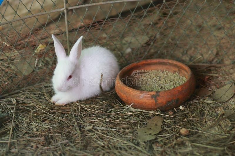 婴孩白色兔子 免版税库存照片