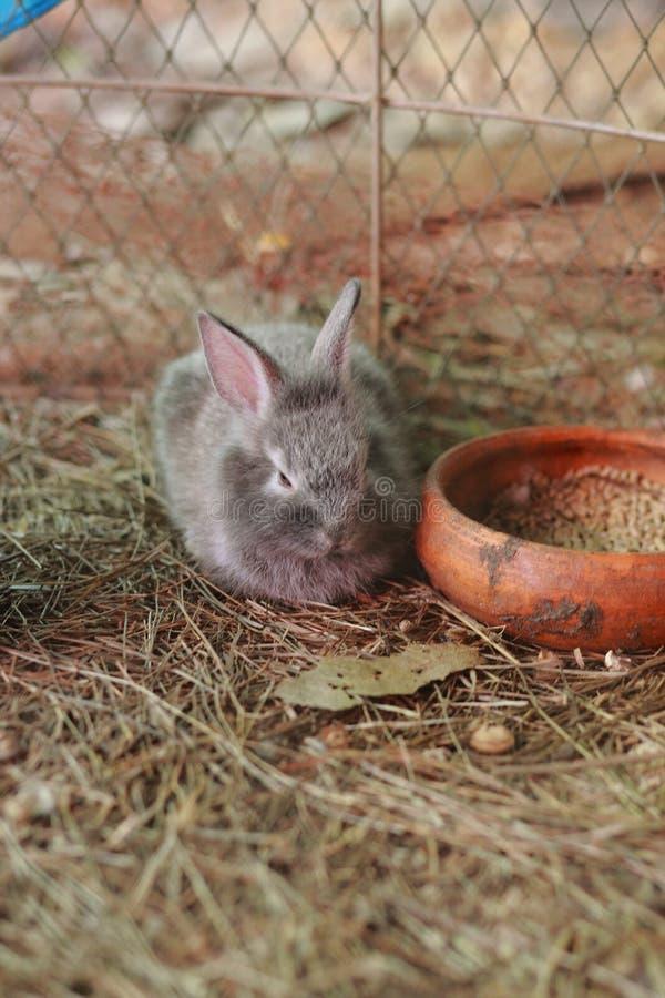 婴孩babbit 免版税库存图片