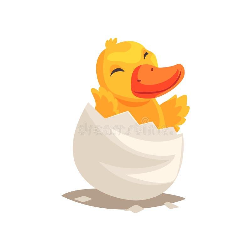 在残破的蛋壳的快乐的新出生的黄色鸭子 孵化从鸡蛋的小鸭子 一点生物