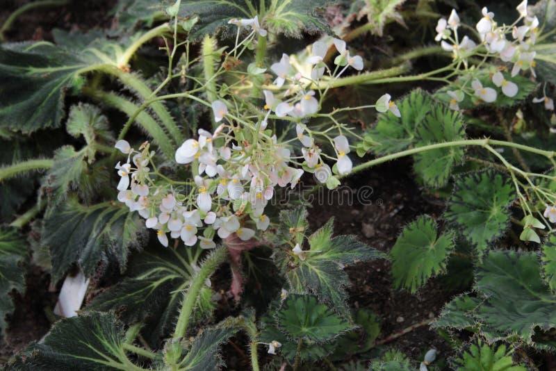 它从彼得大帝植物园的` s美丽的花  库存图片