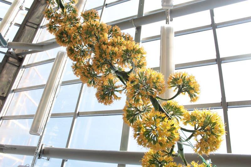 它从彼得大帝植物园的` s美丽的花  免版税图库摄影