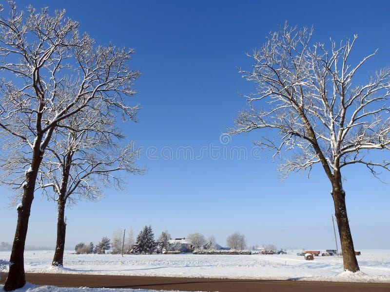 宅基、路和多雪的植物,立陶宛 免版税库存照片