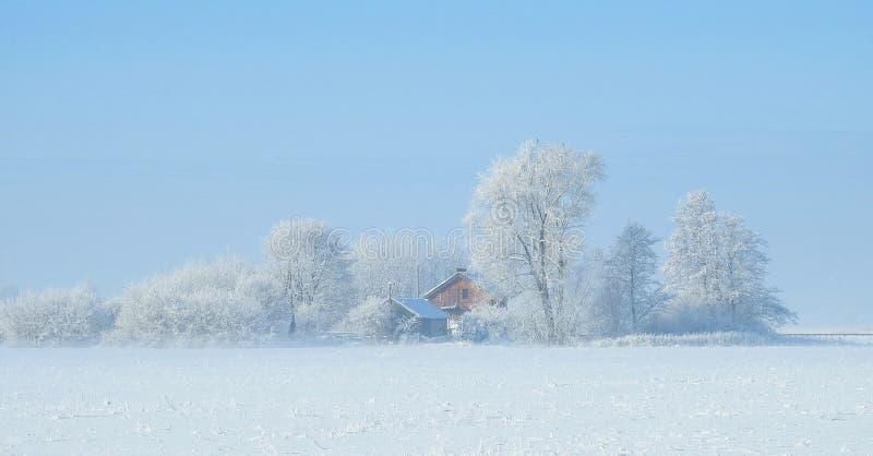 宅基和多雪的植物,立陶宛 免版税库存照片