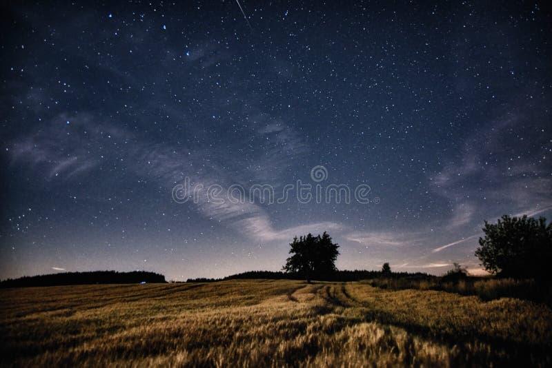 宇宙和树 免版税库存照片