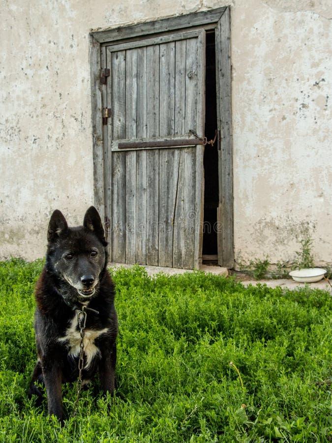 守卫他的房子门的老狗 免版税库存照片