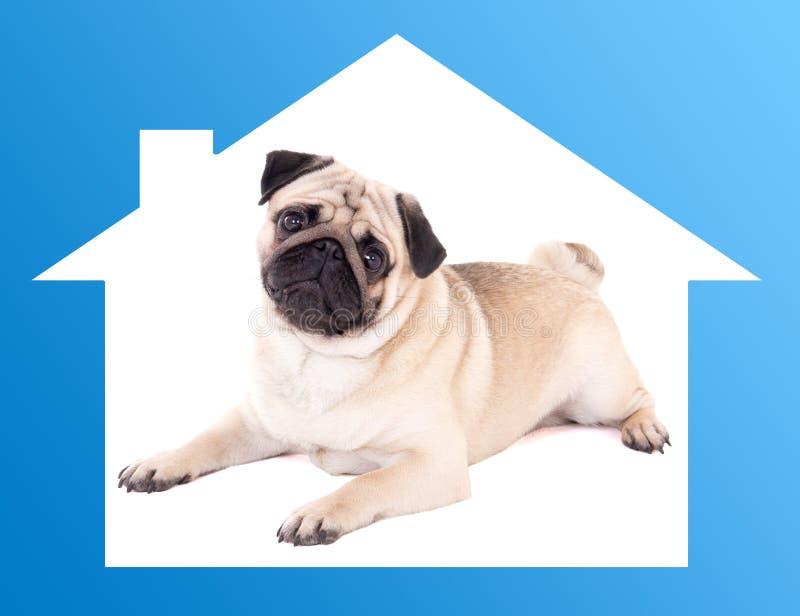 安全家庭概念-在蓝色房子框架的哈巴狗狗 免版税库存图片