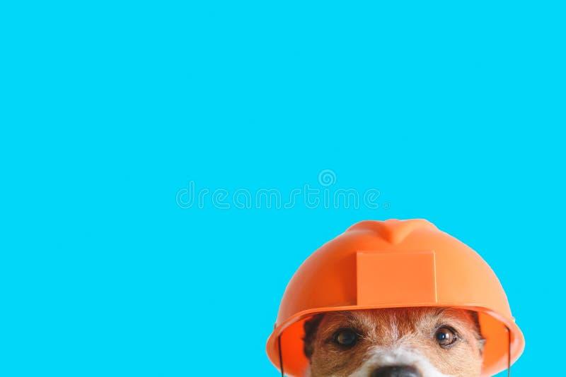 安全,建筑,DIY概念-在安全帽的逗人喜爱的狗在颜色背景 免版税库存图片