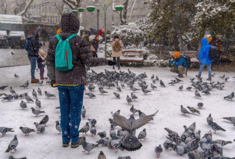 安卡拉/土耳其12月06日2018年:人鸽子哺养的鸽子和照相在Kugulu公园 库存照片