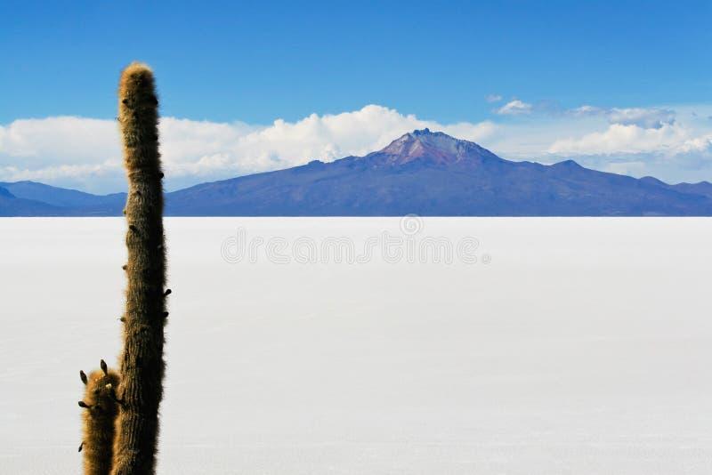 安地斯玻利维亚的de撒拉尔uyuni 免版税库存图片