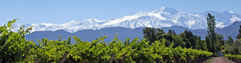 安地斯&葡萄园, Lujan de Cuyo, Mendoza 免版税库存照片