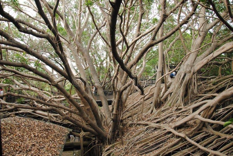 安屏树上小屋 免版税库存图片