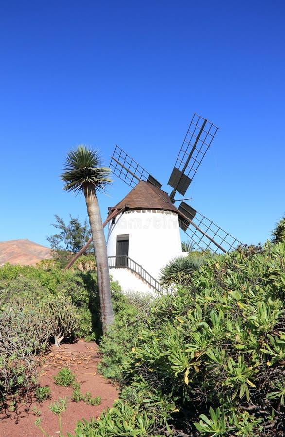 安提瓜岛(Molino de安提瓜岛)的风车。费埃特文图拉岛,加那利群岛,西班牙。 库存图片