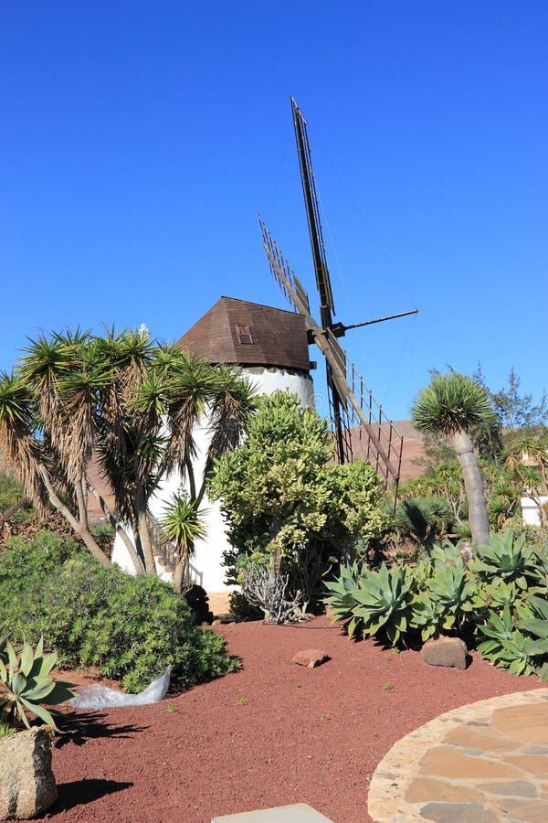 安提瓜岛(Molino de安提瓜岛)的风车。费埃特文图拉岛,加那利群岛,西班牙。 库存照片