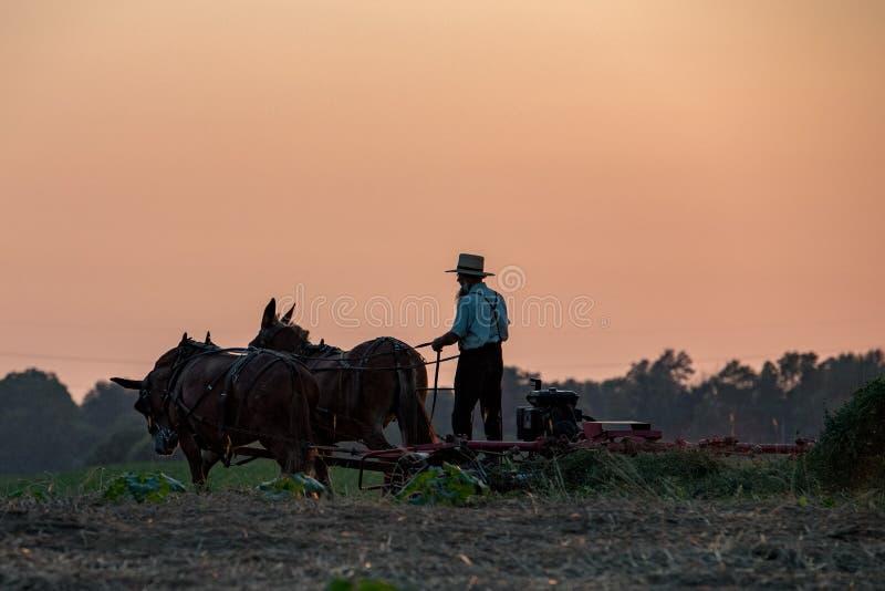 安曼人,当种田与马在日落时 免版税库存照片