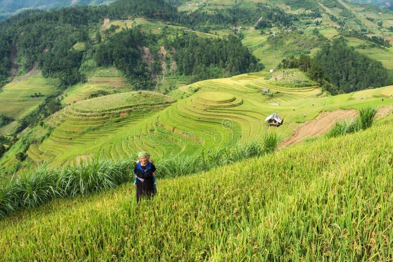 安沛市,越南:2017年9月07日:祖母部落运载了露台米的领域的孙子 免版税库存图片