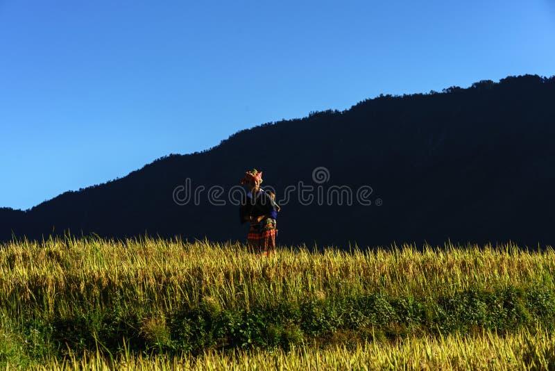 安沛市,越南- 2017年9月18日:在收获季节的露台的米领域与领域的少数族裔妇女在Mu Cang柴, vi 免版税库存图片