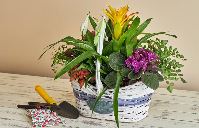 安置不同的花的妇女在一个柳条筐 免版税库存图片