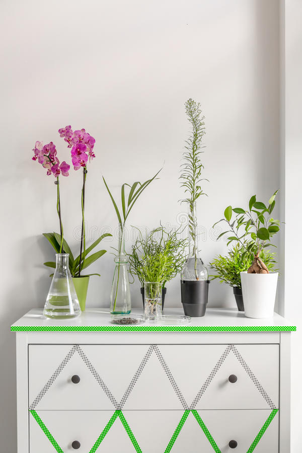 安置用washi磁带装饰一个白色五斗橱的植物 库存图片