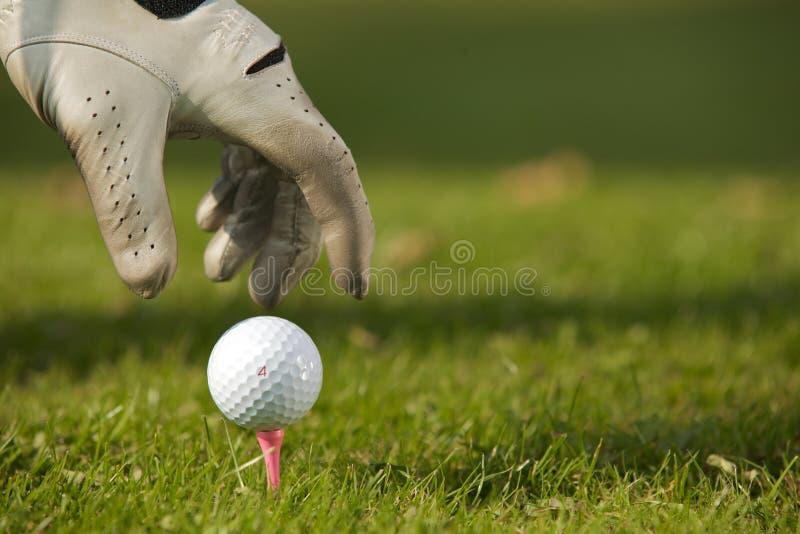 安置高尔夫球的人的手在发球区域,特写镜头 免版税库存照片