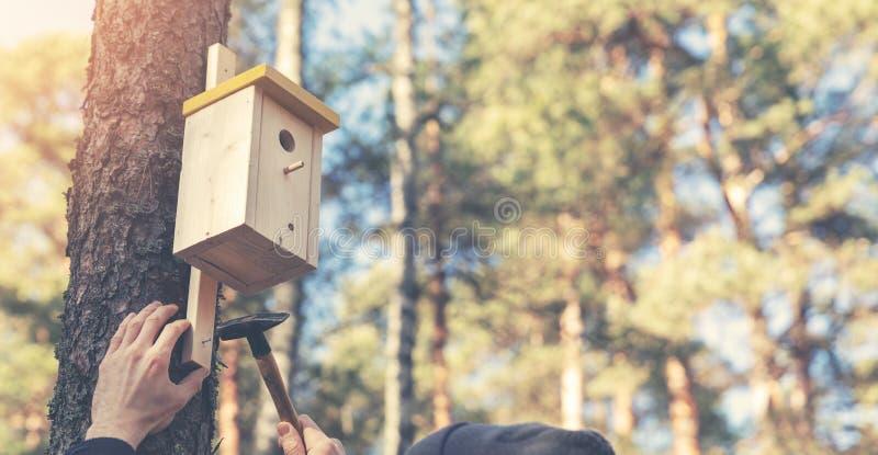 安装鸟舍的鸟类学家在树干 图库摄影