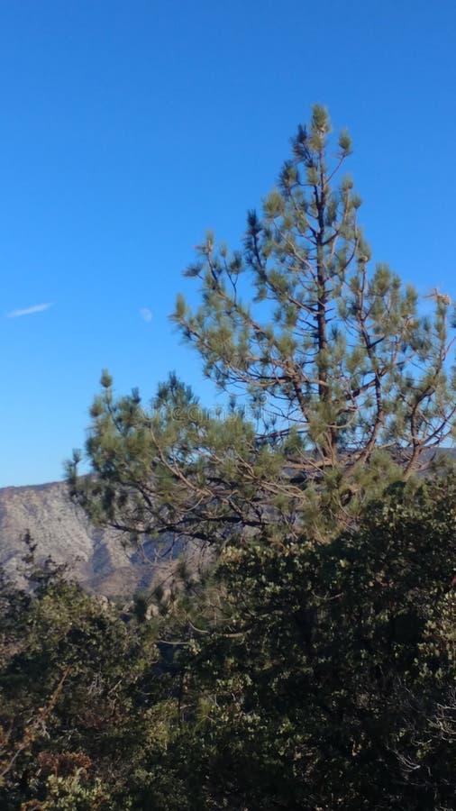 安赫莱斯国家森林 库存图片