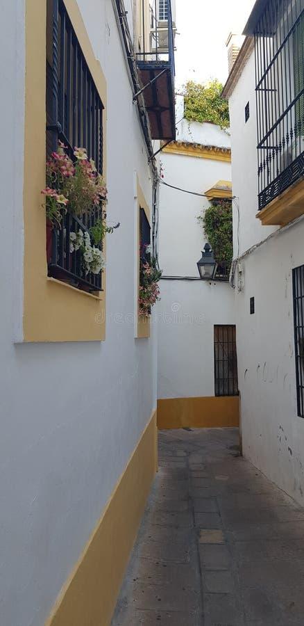 安达卢西亚的花卉街道庭院 免版税库存图片
