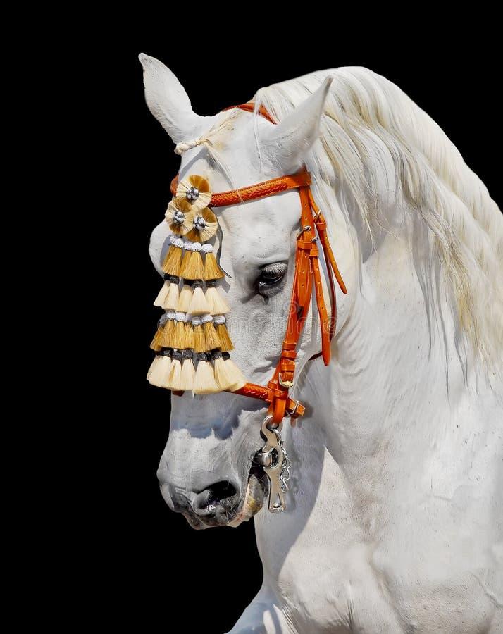 安达卢西亚的装饰灰色马西班牙语 免版税图库摄影