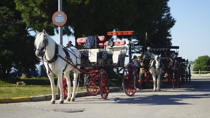 安达卢西亚的马支架Sanlucar 免版税库存照片