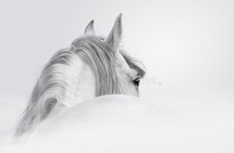 安达卢西亚的马薄雾 库存照片