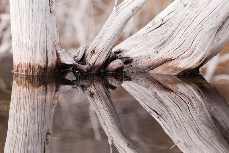 安静反映被风化的老表面结构树水 免版税图库摄影