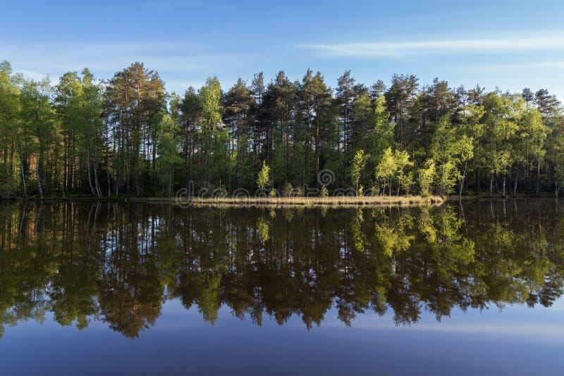 安静和镇静森林的湖和反射 免版税库存图片