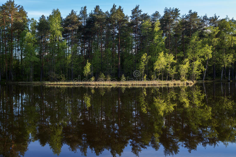 安静和镇静森林的湖和反射 库存照片