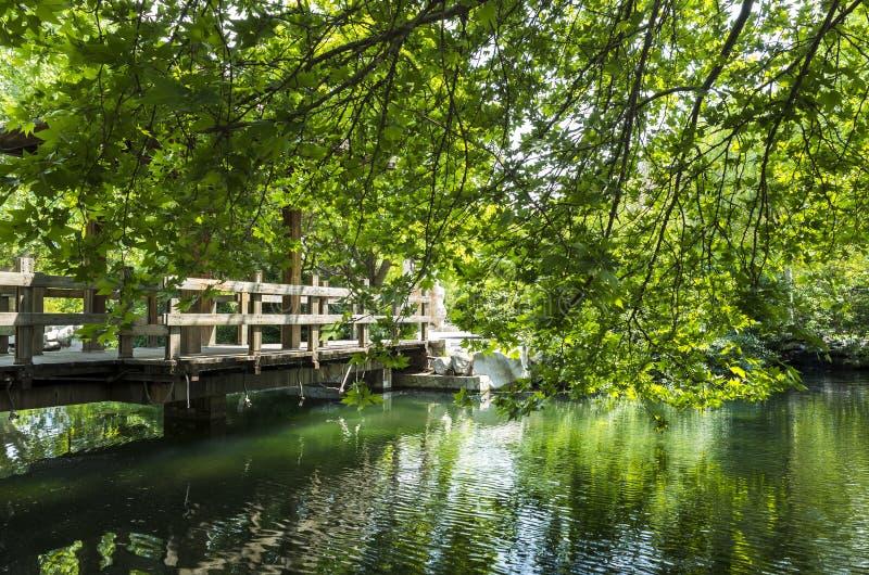 安静的夏天池塘 免版税图库摄影
