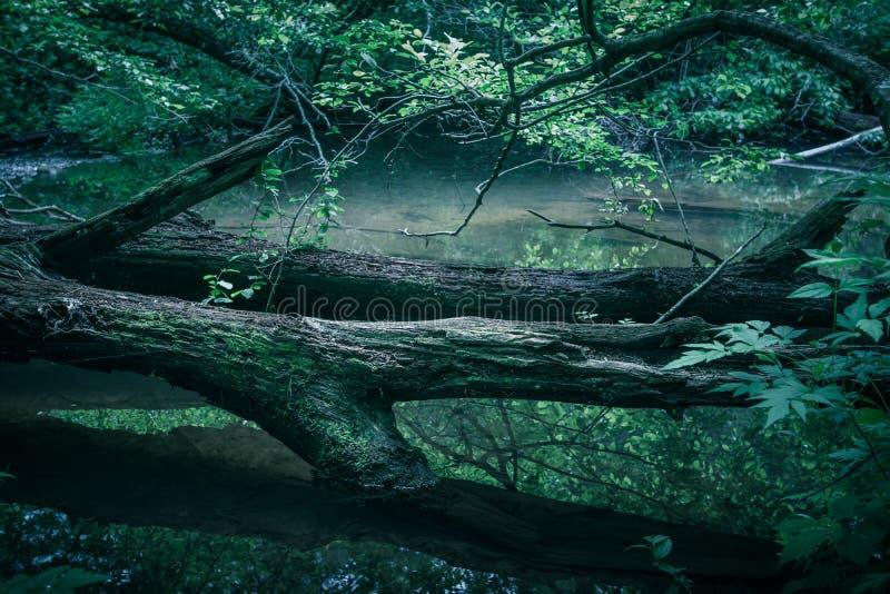 安静的山河在北卡罗来纳西部 免版税库存照片