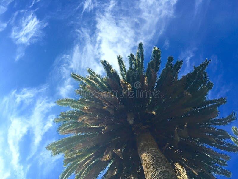 安静的棕榈 库存图片