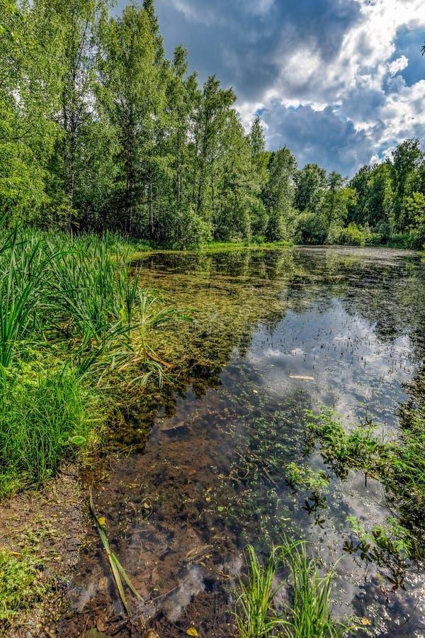 安静的水在森林池塘 免版税库存图片