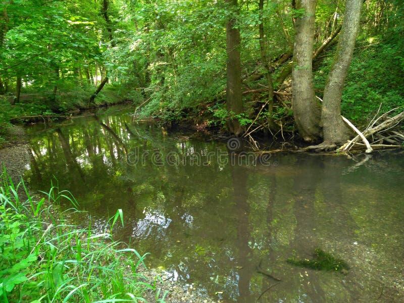 安静的河在有反射和树的森林里 免版税库存图片
