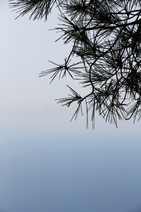 安静的海景,与杉树分支  库存图片