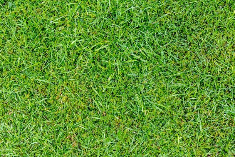 完全削减草绿叶背景 库存图片