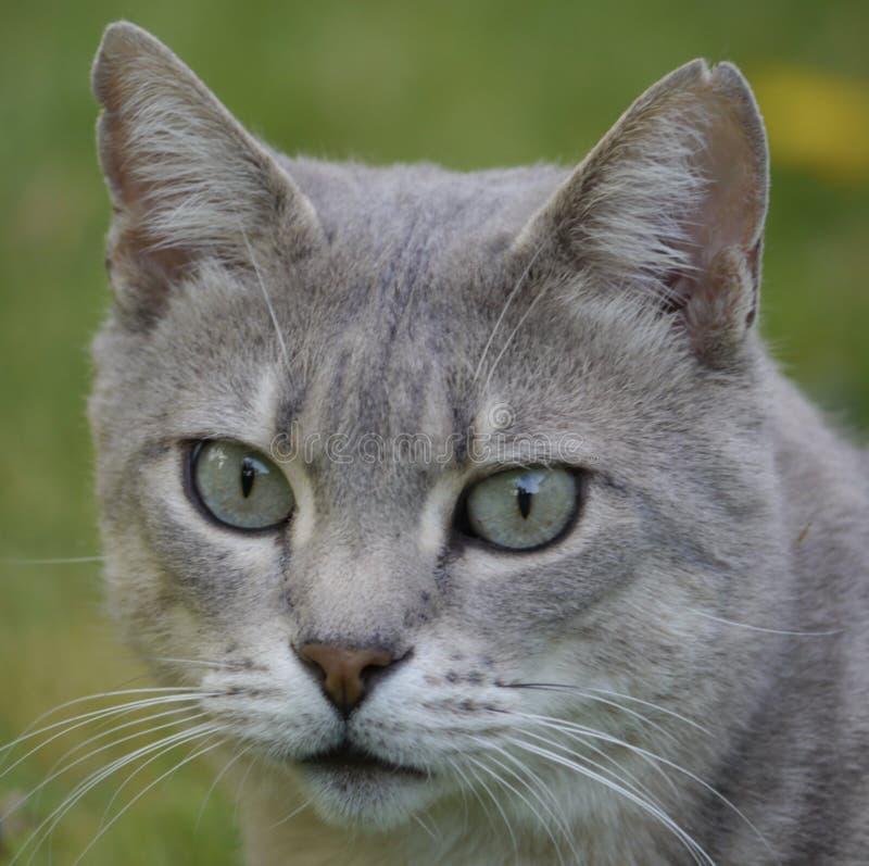 完善猫 库存照片