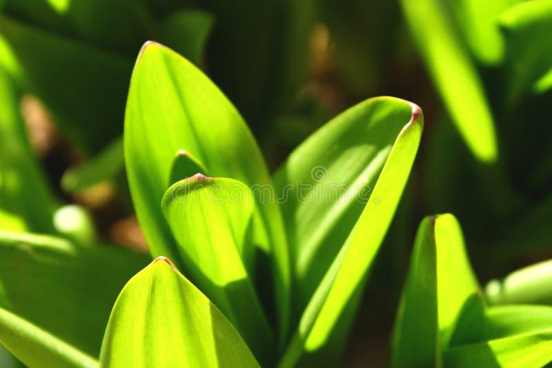 完善的绿草和降露抽象背景 免版税库存图片