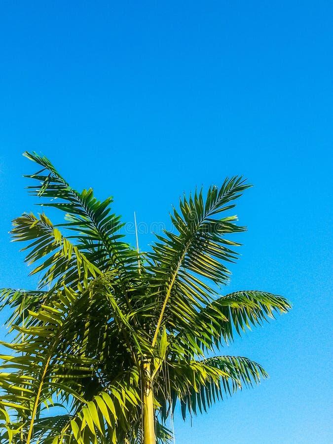 完善的蓝天和棕榈树 免版税库存照片
