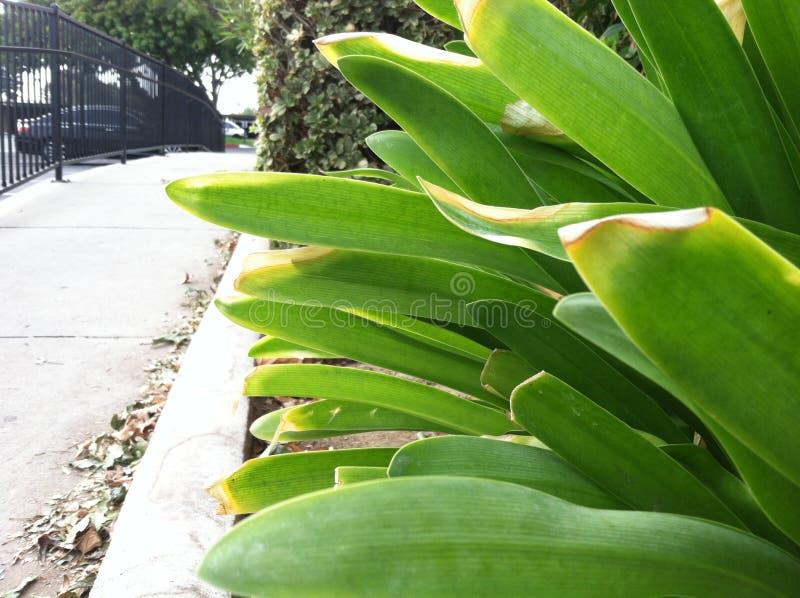 完善的绿色植物 图库摄影