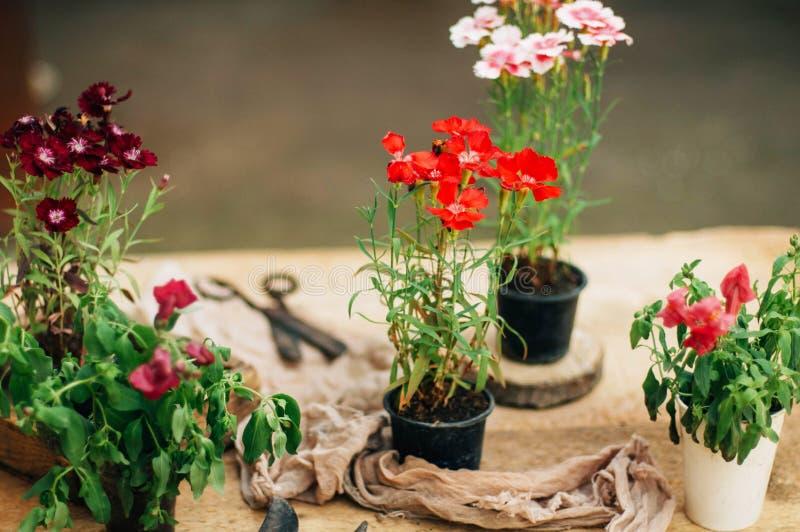 完成从事园艺的工作的花匠在土气的桌上 工作在庭院里