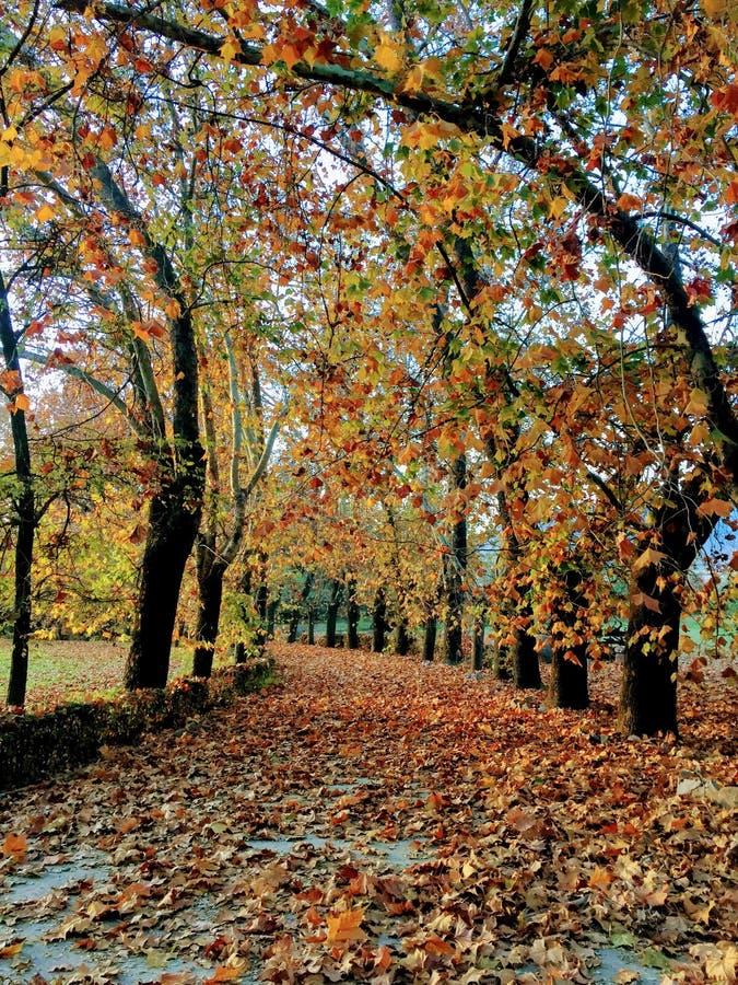 完整色彩的秋季段落 免版税库存照片
