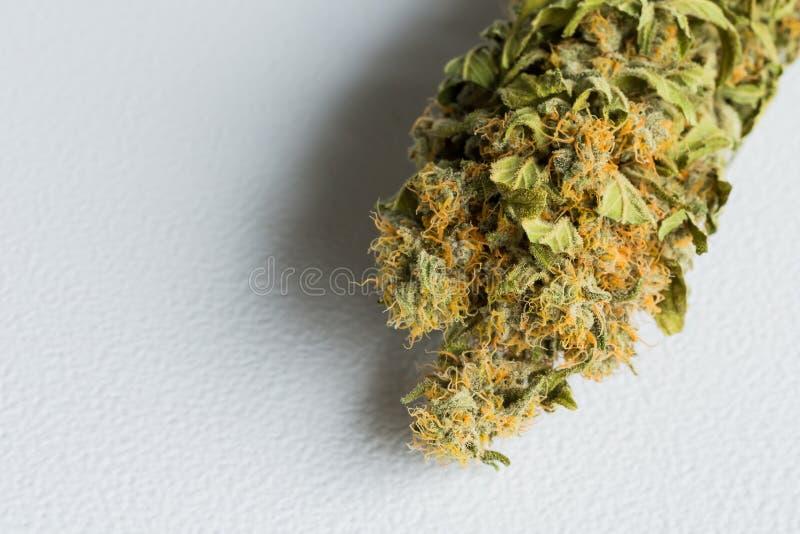 宏指令接近一棵干大麻医疗大麻植物与 免版税库存图片